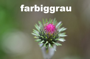 logo_farbiggrau